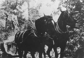 Charles Schoonover and his horse team hauling logs