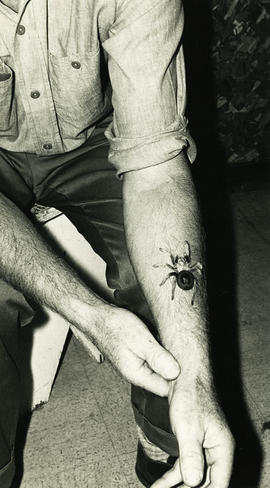 Spider on arm