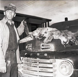 Man with dead cougars