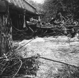 Stawamus Creek during flood