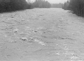 Cheakamus River during flood