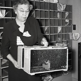 Woman with bees in office