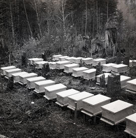Beehives [?]