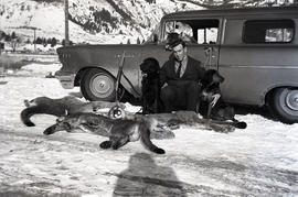Man, dogs and dead cougars