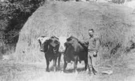 George Paddy with oxen
