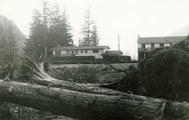 Logs and buildings